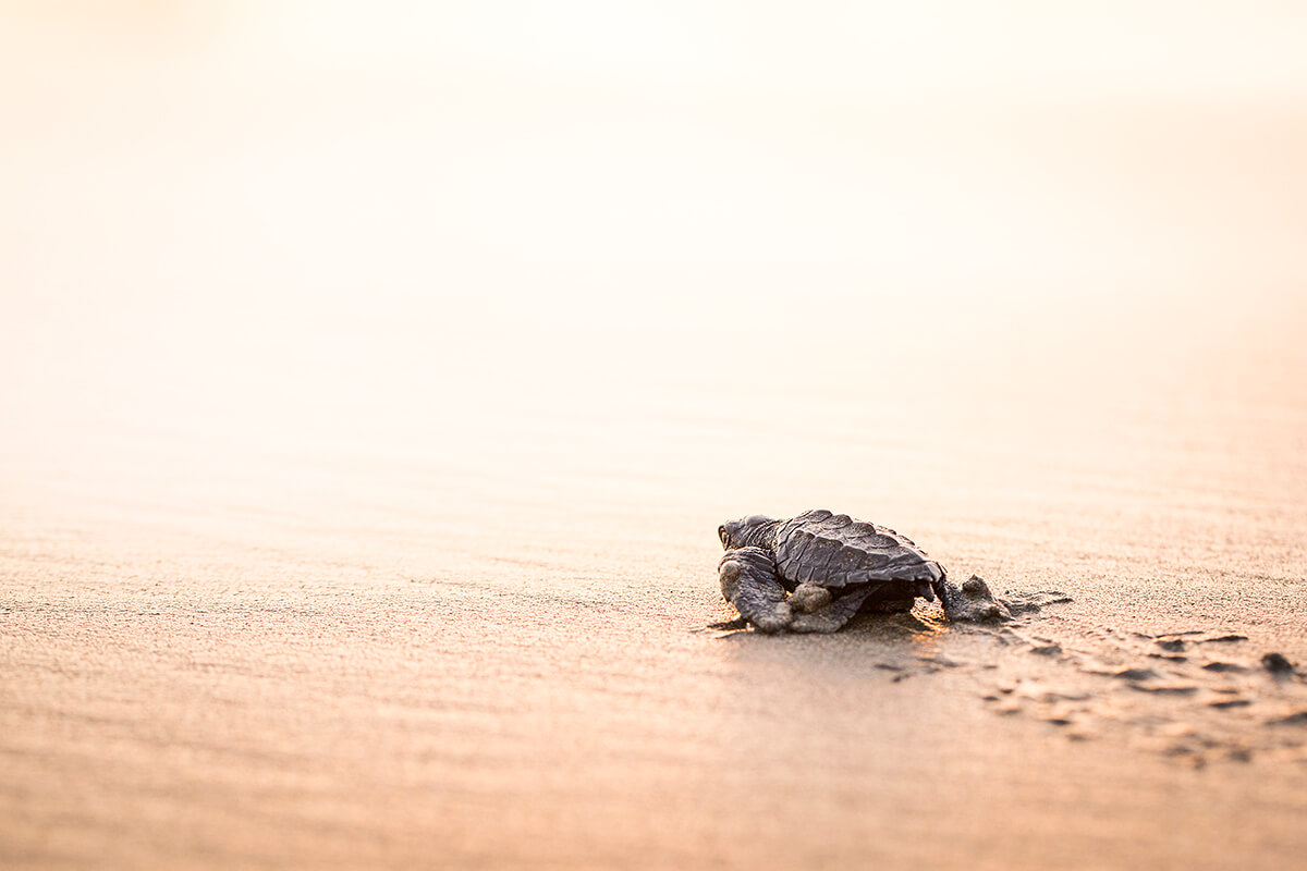 Wild baby turtle